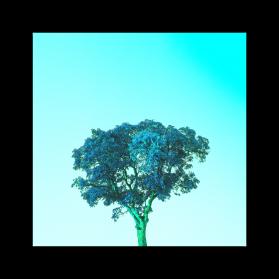 Bluecolli